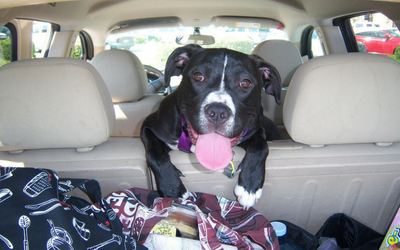 image for Summer Road Trips with Your Pet